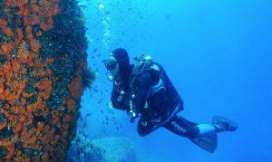 ustica-diving_800x478
